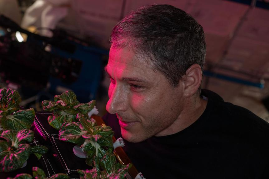 Two plants harvested at the International SpaceStation.