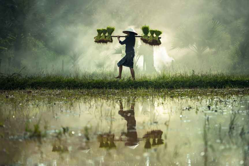 THE SUFFEREING OF INDIANFARMERS