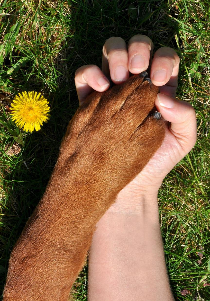 """""""If love could be defined, in its purest form"""" – Never fading love fordogs."""