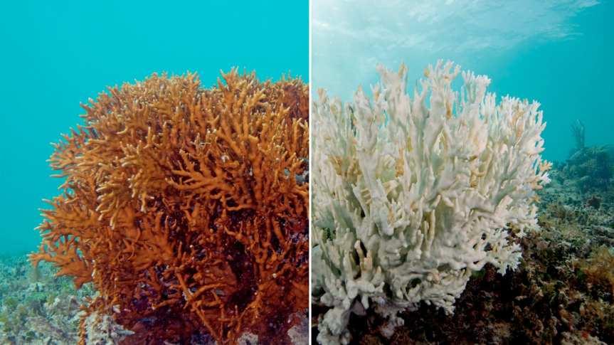 Ocean Acidification: A Threat to Marinelife
