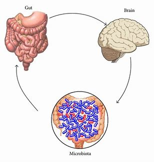 The Gut & BrainRelationship