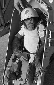 Meet Ham : The first Chimp inSpace