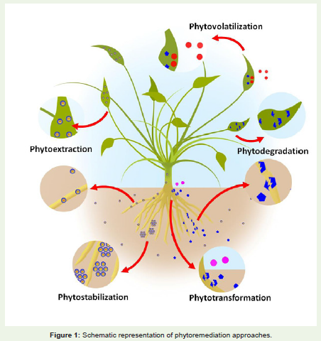 Phytoremediation : A sustainable approach for ecosystemrestoration
