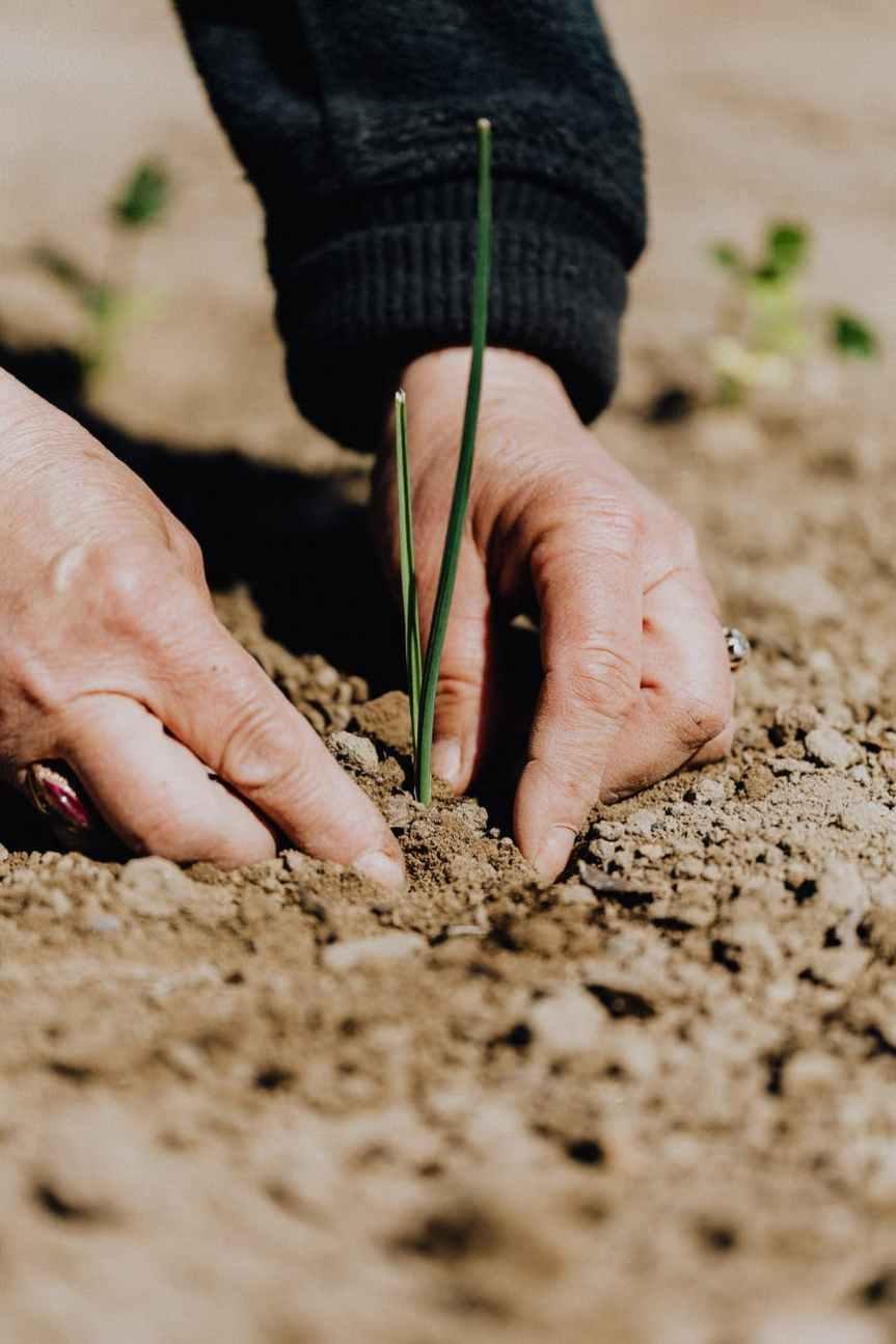 IMPORTANCE OF PLANTATION